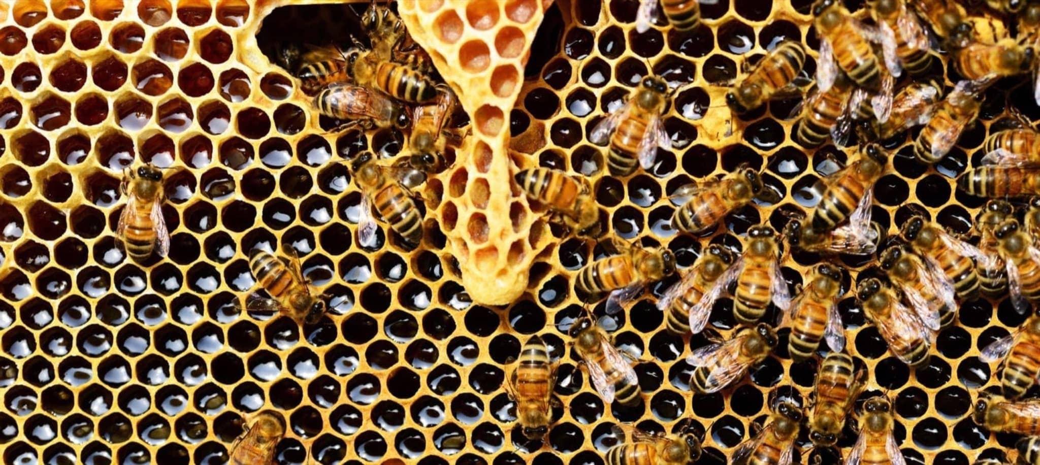 Die Tabakpflanze - Eine Apotheke für Insekten 20